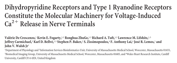 Dihydropyridine Receptors and Type 1 Ryanodine Receptors Constitute the Molecular Machinery for Voltage-Induced Ca2ϩ Release in Nerve Terminals