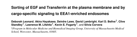 Sorting of EGF and Transferrin at the plasma membrane and by cargo-specific signaling to EEA1-enriched endosomes