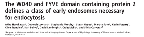 The WD40 and FYVE domain containing protein 2 defines a class of early endosomes necessary for endocytosis